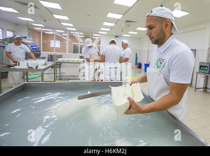 Moscow Region, Russia. 29th Oct, 2016. Making Stracchino at the DolceLatte cheese factory. © Stanislav Krasilnikov/TASS/Alamy - Stock Photo