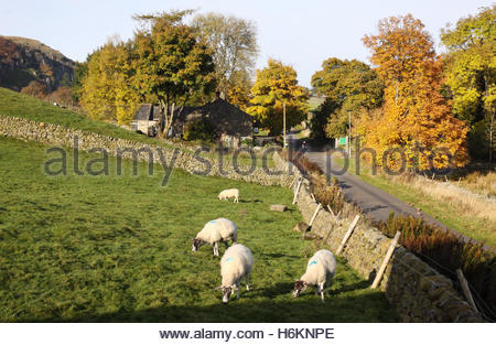 Holwick, Middleton-in-Teesdale, Co Durham UK 31st October 2016. A bright and sunny Autumn morning in the North Pennine - Stock Photo