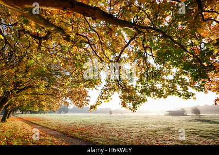 Autumn branches overhanging a carpet of golden leaves and a path leading through a misty field during sunrise - Stock Photo