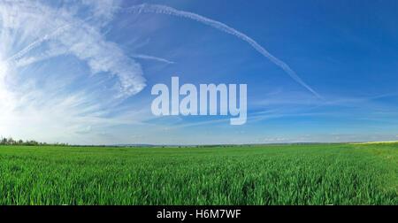 grass fields - Stock Photo