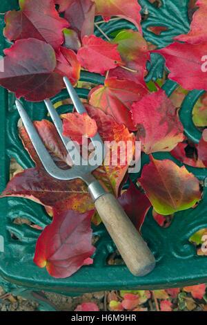 Garden hand fork with fallen leaves of Virginia creeper Parthenocissus quinquefolia - Stock Photo