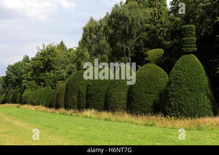 Summer, Yew Tree avenue near Clipsham village, Rutland, England, UK - Stock Photo
