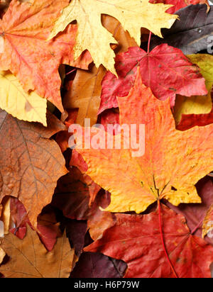 tree brown brownish brunette leaves oak dry dried up barren veins maple dried birch october november stalk stem - Stock Photo