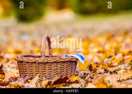 Empty wicker basket on golden autumn leaves in forest. Empty basket for your products. - Stock Photo
