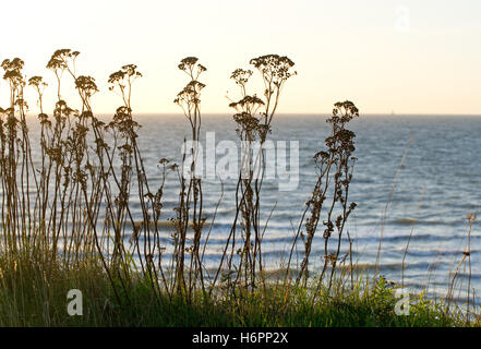 spare time free time leisure leisure time horizon plant holiday vacation holidays vacations sunset tourism shine - Stock Photo