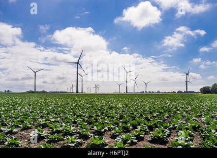 Germany, Schleswig-Holstein, the flat landscape of Dithmarschen with wind turbines and cabbages - Stock Photo