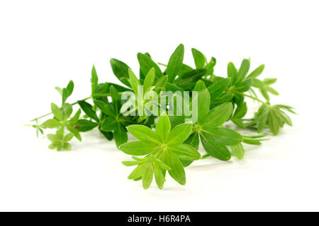 flavour taste smell woodruff herbs spice green alcohol spring flavour taste spring messenger May smell herb medicinal plant