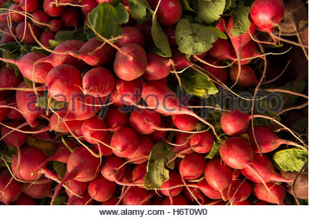 Radishes at the Farmer's Market in the historic Haymarket district of Lincoln, Nebraska. - Stock Photo
