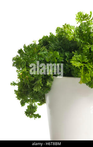 green, boil, cooks, boiling, cooking, flowerpot, spices, parsley, herbs, plant, - Stock Photo