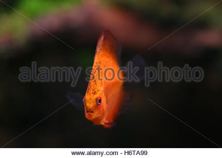 fishes crustaceans - Stock Photo