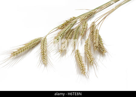 other nutrition - Stock Photo