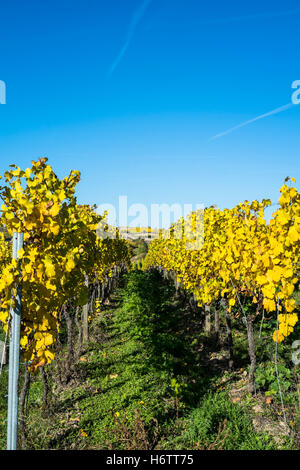 Vineyards in autumn, Pfalz region, Germany - Stock Photo