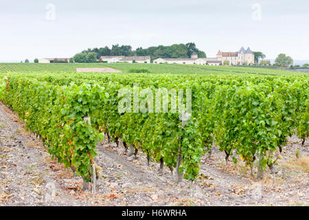 arrangement travel agriculture farming europe vineyard france outside style of construction architecture architectural - Stock Photo