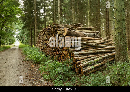Pile of cutted wood in the forest for firewood - Stock Photo