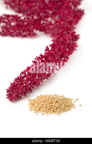 Amaranth flowers and seeds on white background - Stock Photo