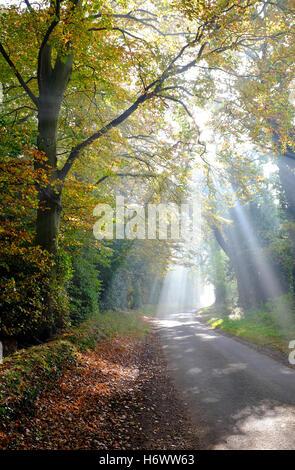 sunlight streaming through autumn woodland trees - Stock Photo