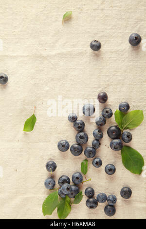 food aliment sweet modern modernity brown brownish brunette new leaves agriculture farming summer summerly ripe - Stock Photo