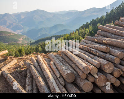 Stacked timber logs with background of mountains and forest. Taken in South Africa's border region to Swaziland. - Stock Photo