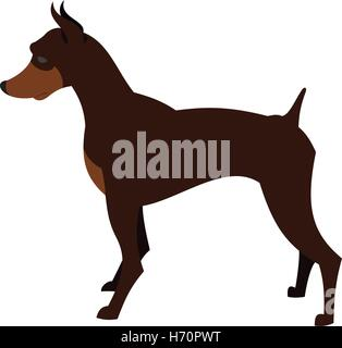 Doberman pincher dog breed for guard and security, vector illustration - Stock Photo