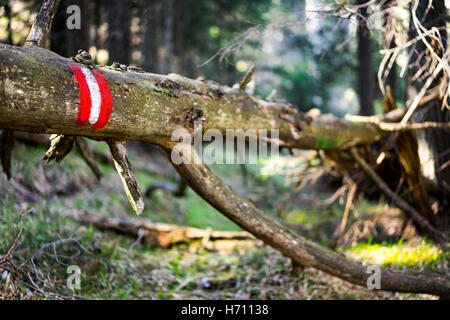 Close Up of Fallen Dead Tree with Red and White Striped Paint Marking on Trunk in Sunny Forest - Navigation Forestry - Stock Photo