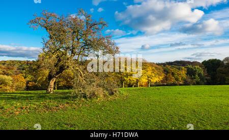 Autumn foliage at Roundhay Park, Leeds - Stock Photo