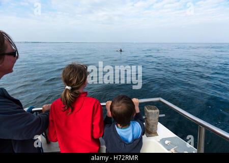 Dolphin watching near the Saltee Islands, County Wexford, Ireland. - Stock Photo