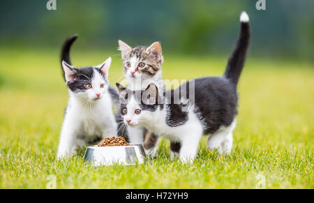 Cat. Cute little kitten with a bowl of granules at home or in the garden. - Stock Photo
