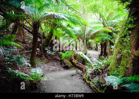 walk go going walking environment enviroment famous tree trees park wild tourism leaves australia outdoor outdoors - Stock Photo