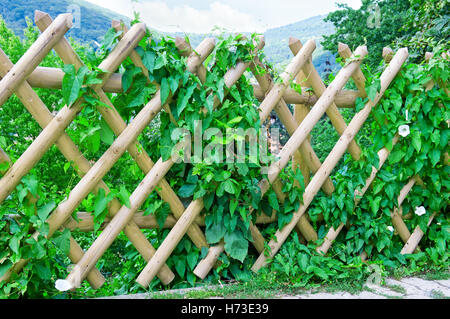 wooden fence and green plants - Stock Photo