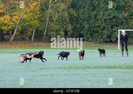 London, UK. 3rd November, 2016. UK weather. Early morning frost on Wandsworth Common, Battersea as cold spell approaches. - Stock Photo