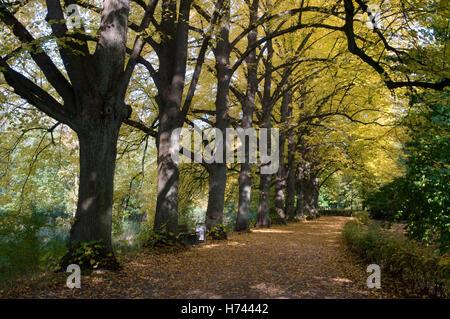 Tree-lined avenue at the Stever river in Luedinghausen, Muensterland region, North Rhine-Westphalia