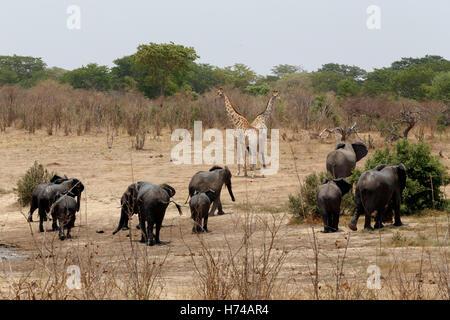 mammals - Stock Photo