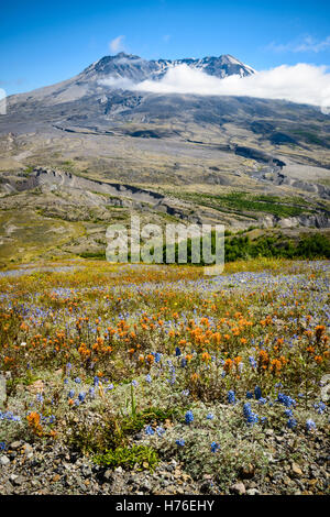 Mount St. Helens National Volcanic Stock Photo