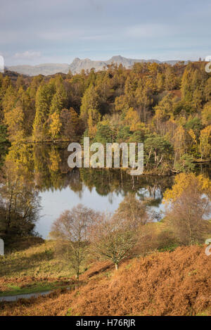Tarn Hows and the Langdale Pikes in autumn in the English Lake District national park, Cumbria, England, UK - Stock Photo