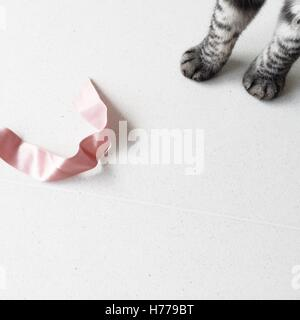 Cat's paws and a ribbon