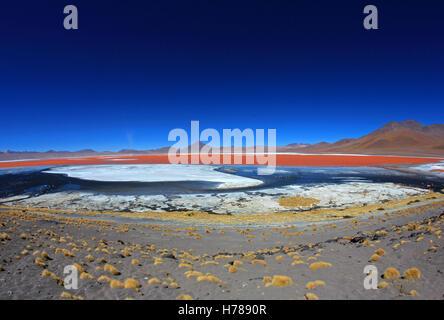 The nice red colored Laguna Colorada, fisheye prespective, southern Bolivia, South America - Stock Photo