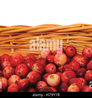 Fresh mountain cranberries, isolated Vaccinium vitis-idaea cowberry basket, large detailed Rhodococcumvitis-idaea - Stock Photo