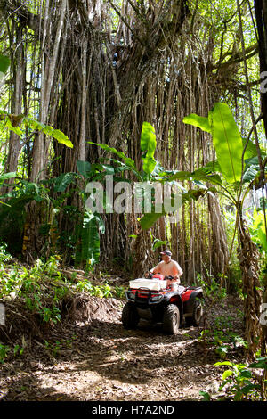 Pitcairn, sons of mutineers! -  06/06/2012  -  Pitcairn / Pitcairn  -  A quad bike on a small trail with huge banyans - Stock Photo
