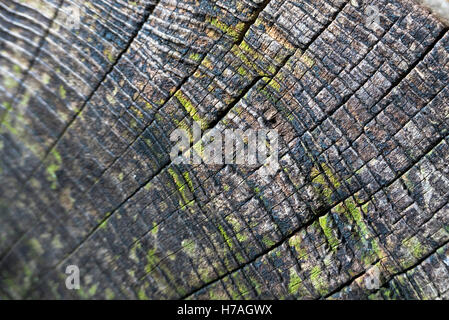 Cross section of a tree trunk showing annual growth rings - Stock Photo