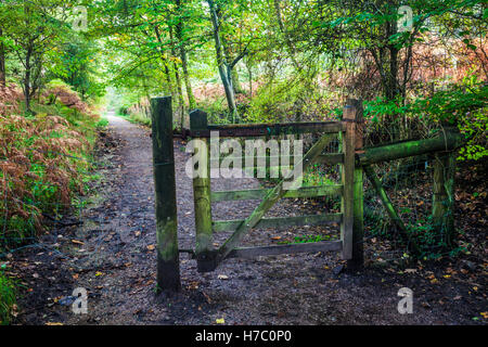 Wooden gate along a footpath in the Forest of Dean, Gloucestershire. - Stock Photo