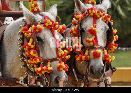 Horses festooned in fair, horse decked - Stock Photo