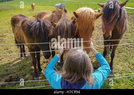 man with long hair feeding horses on meadow - Stock Photo