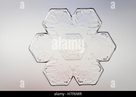 Snowflake magnified under microscope - Stock Photo