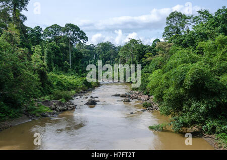 River flowing through the primary rainforest in Danum Valley - Stock Photo