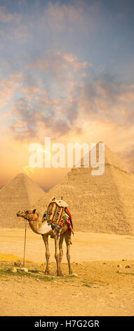 Brilliant sunset behind camel with colorful saddle in front of the Egyptian pyramids of Giza in Cairo, Egypt.  copy - Stock Photo