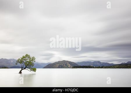 Lonely willow tree in Lake Wanaka, New Zealand - Stock Photo