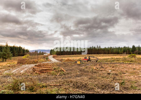 Clearcutting logging industry showing timber / logs / trees and forestry machinery equipment  Model Release: No. - Stock Photo