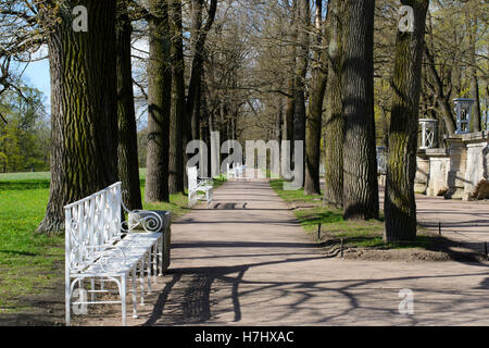 Bench and trees in a park casting very long shadows at late afternoon - Stock Photo