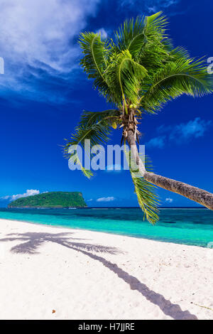 Tropical vibrant natural beach on Samoa Island with palm tree over water - Stock Photo