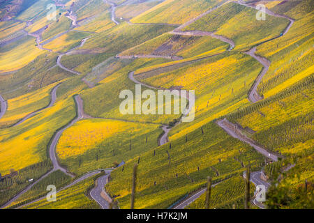 Moselle Valley, vineyards, mostly Riesling grapes, between Bernkastel-Kues and Graach, Germany, fall, autumn colors, - Stock Photo